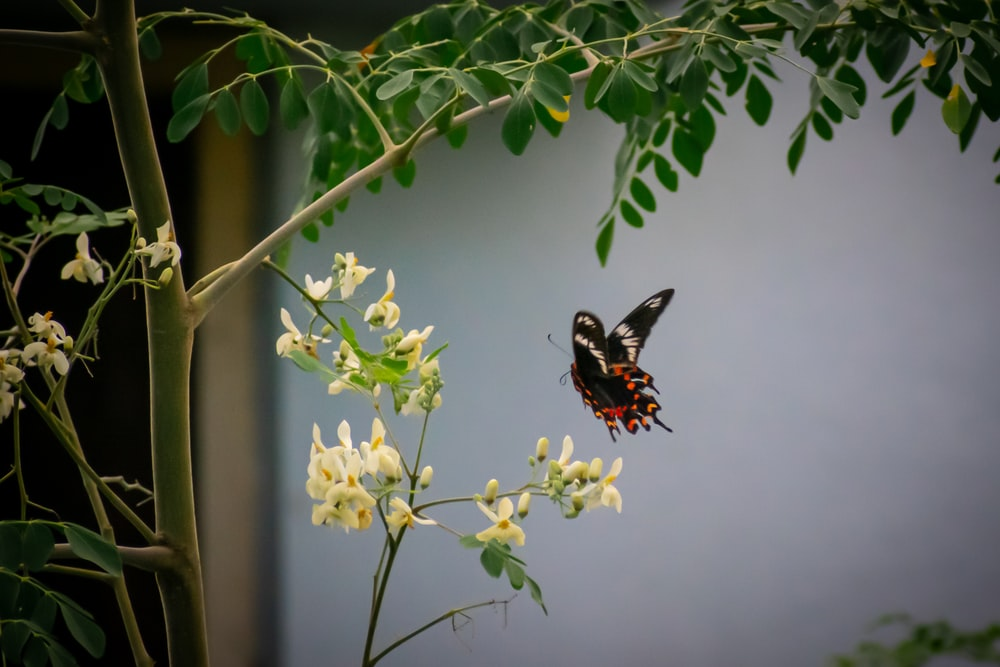 black and red butterfly perched on yellow flower