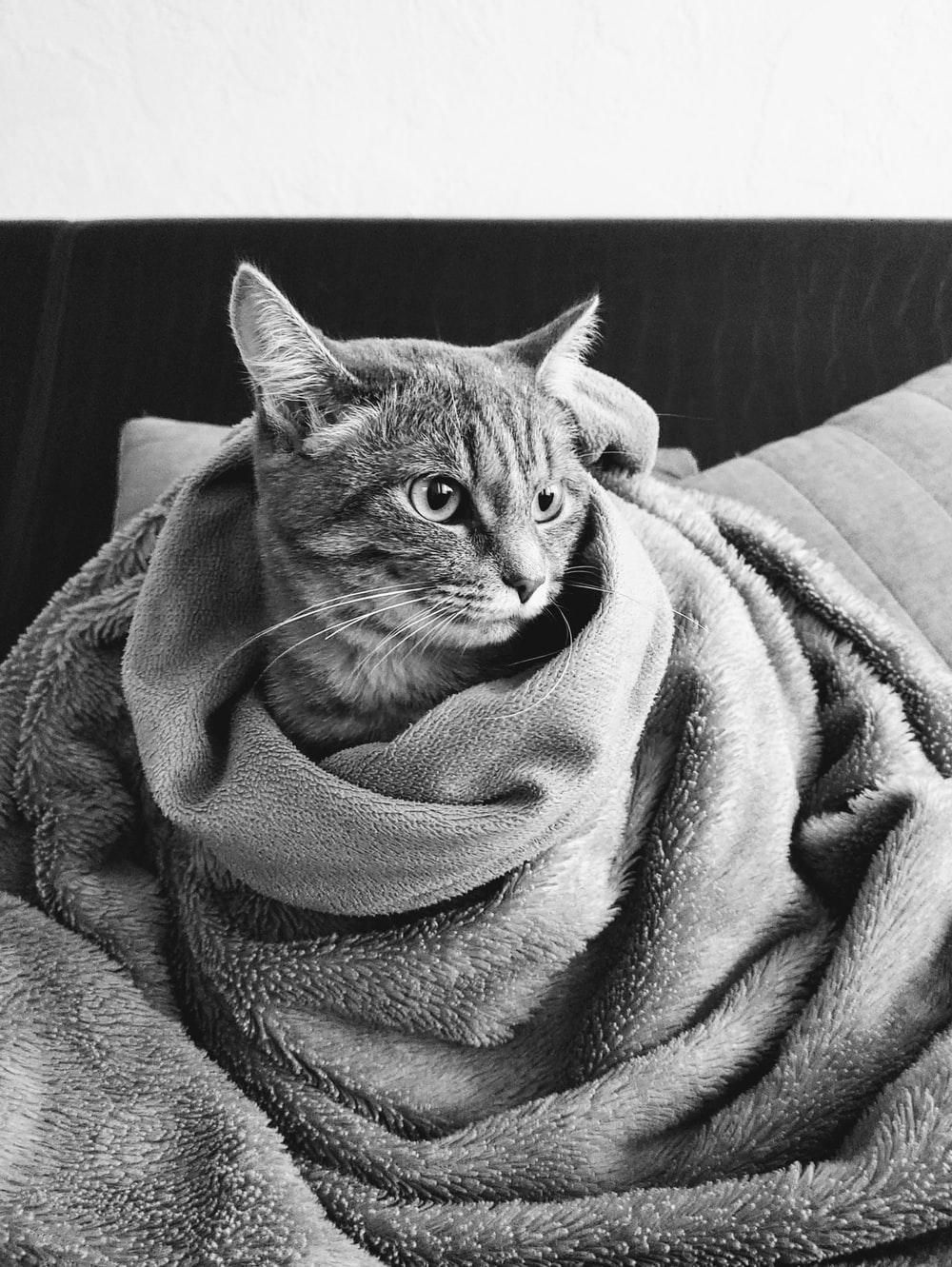 grayscale photo of cat covered with blanket