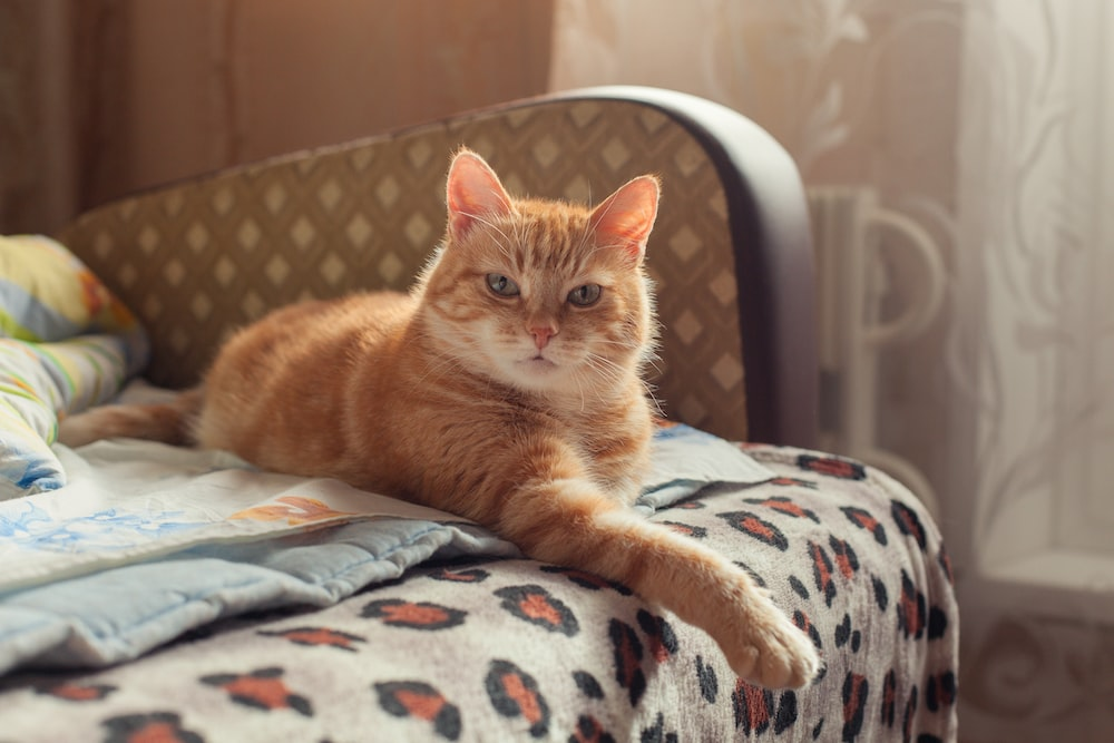 orange tabby cat on white and blue textile
