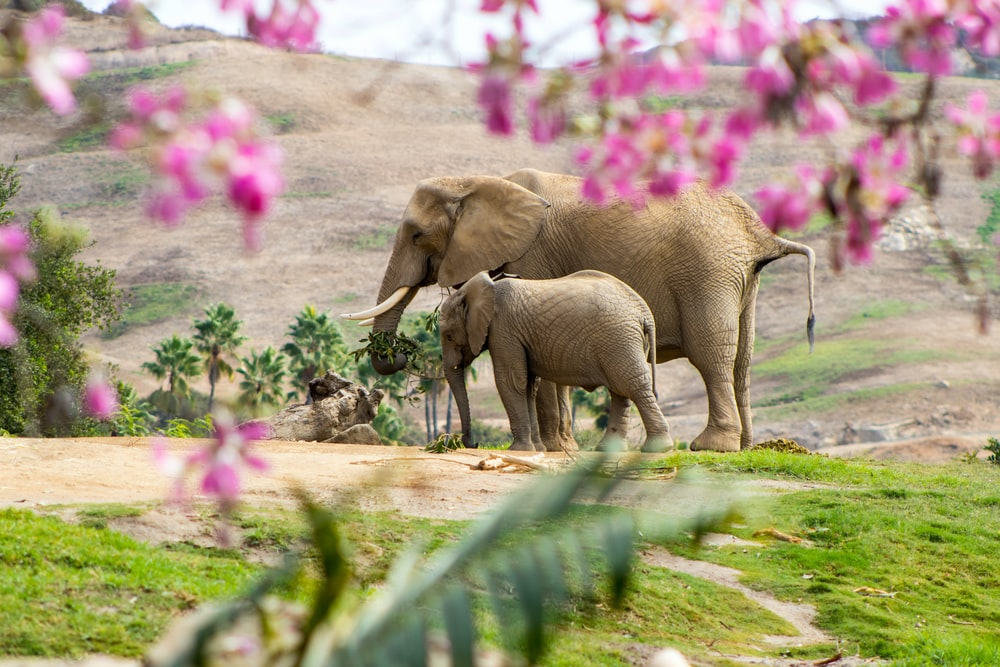 elephant and calf on green grass field during daytime