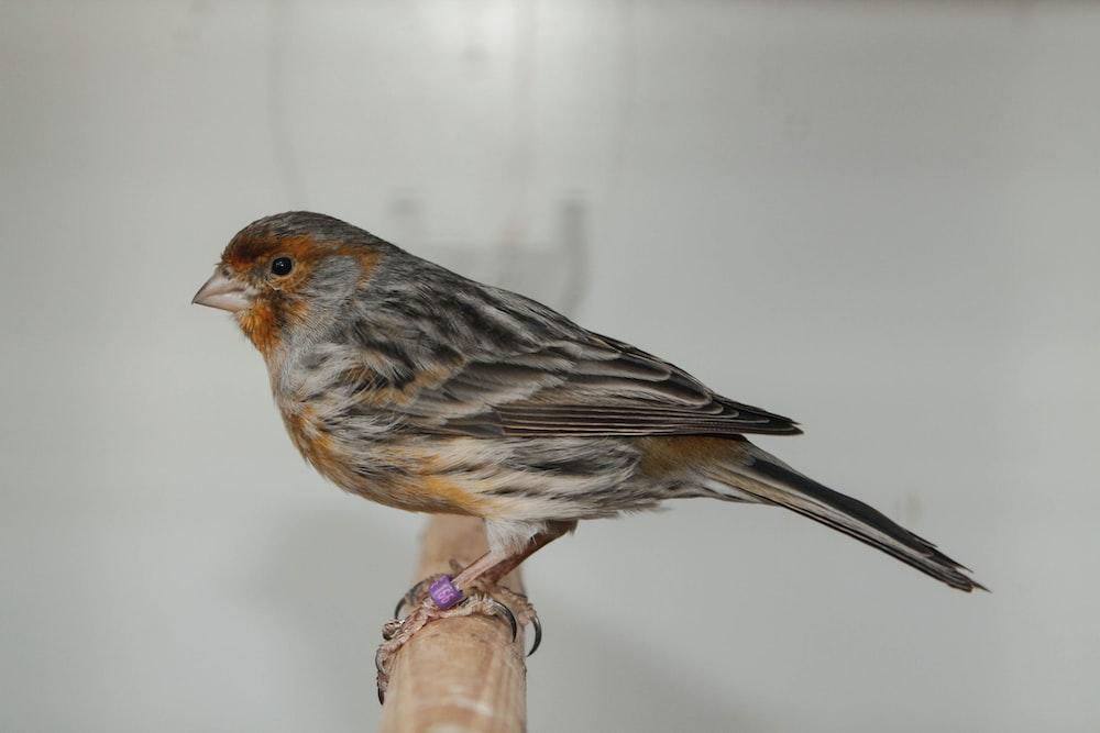 brown and black bird on brown stem