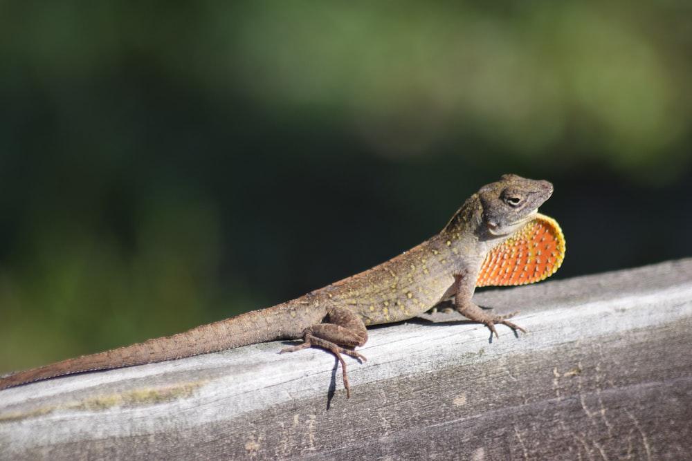 brown lizard on brown wood