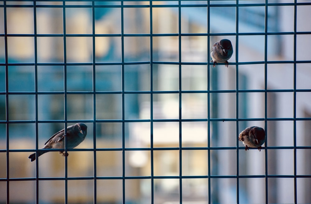 birds in cage during daytime