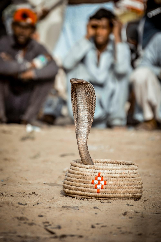 brown woven basket on brown sand