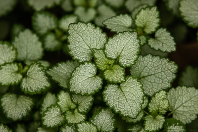 green plant in close up photography potted plant teams background