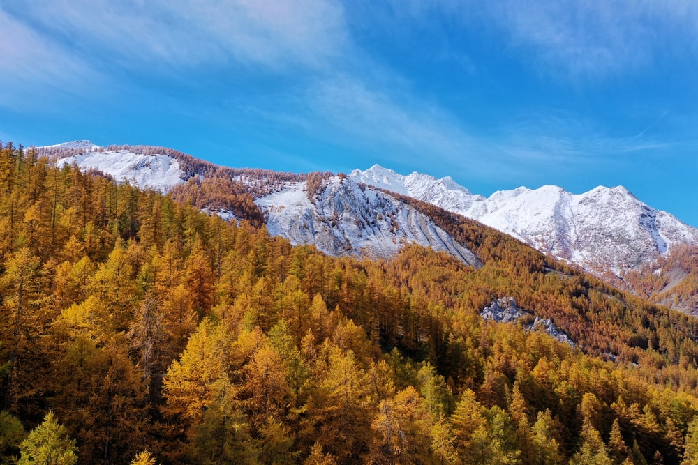 green and yellow trees near mountain under blue sky during daytime