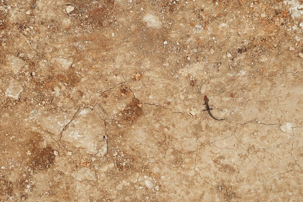 black hair on brown floor