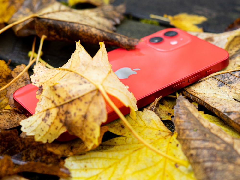 red iphone case on dried leaves