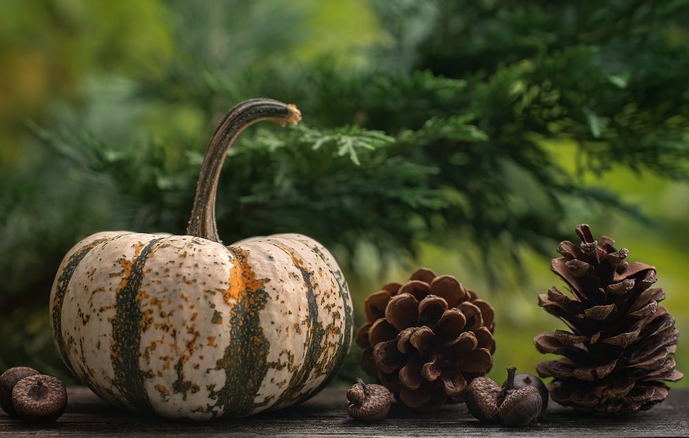 green and yellow pumpkin on brown wooden table