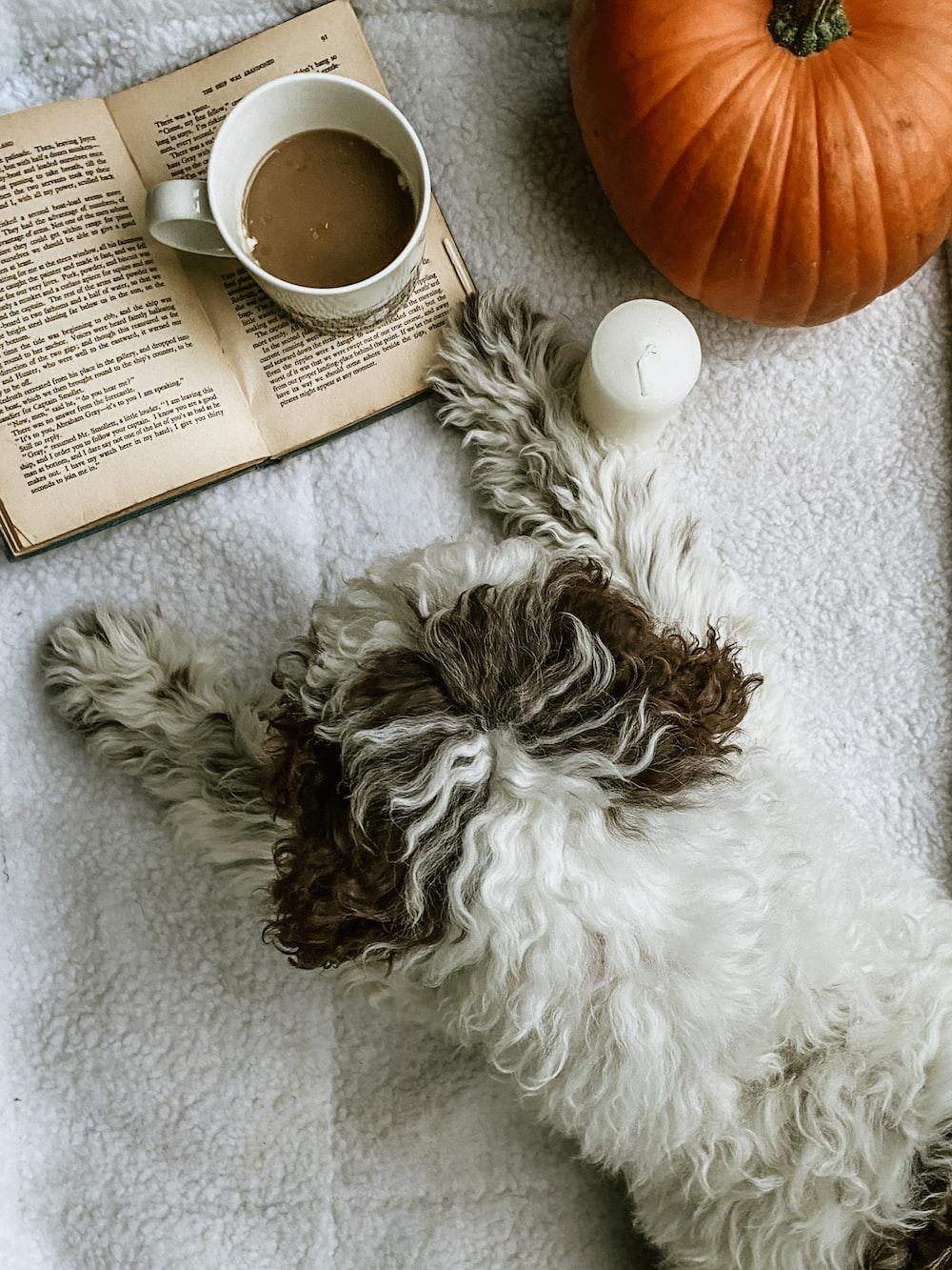 white and black long coated dog lying on white textile