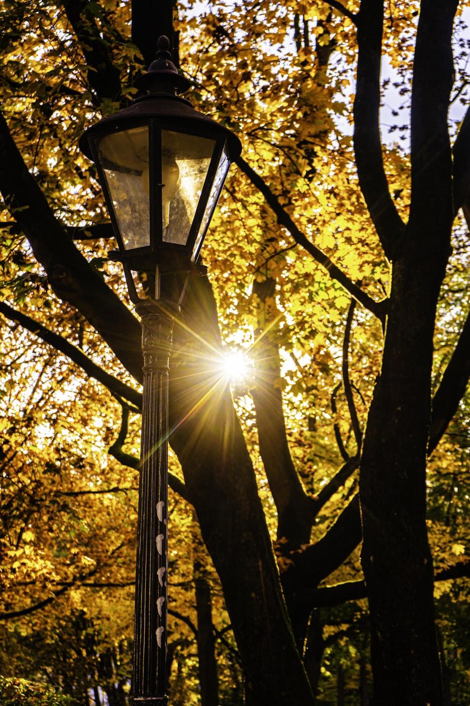 black lamp post near yellow leaves tree during daytime