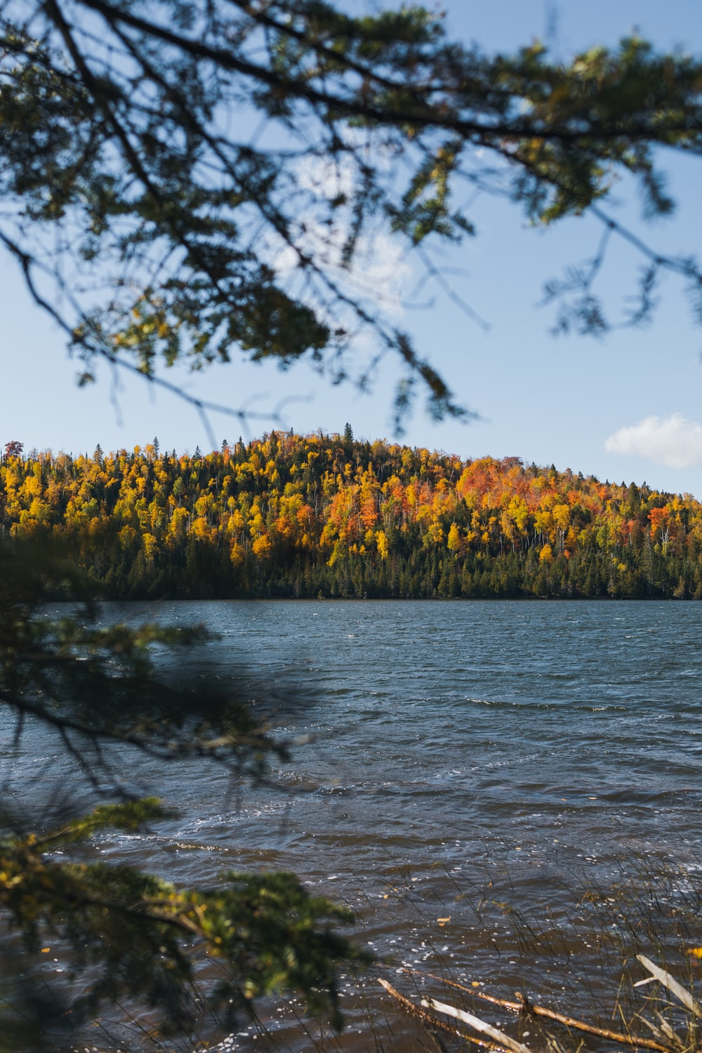 yellow and green trees beside river during daytime