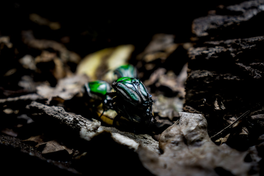 green beetle on brown rock