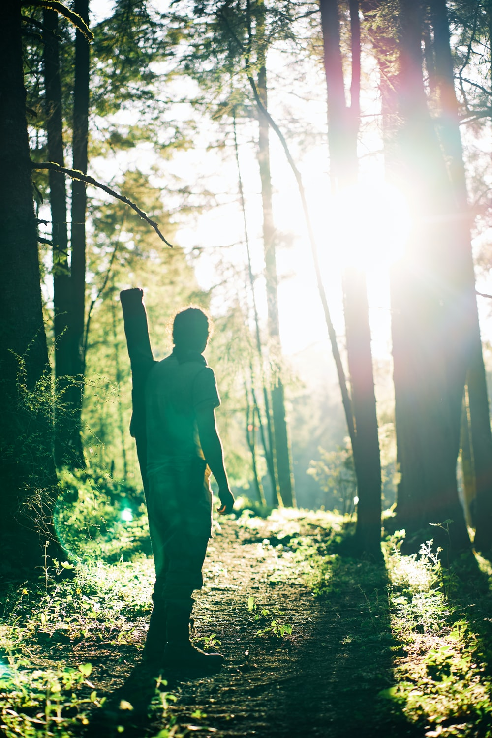 silhouette of man standing in forest during daytime