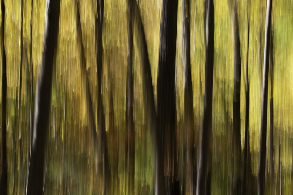 brown and green bamboo trees