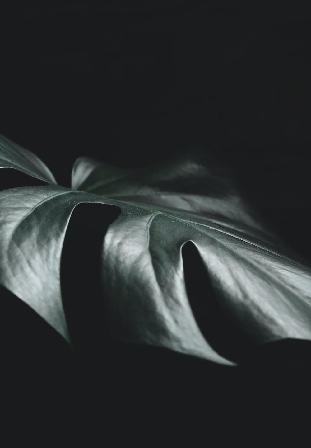 green leaf in dark room