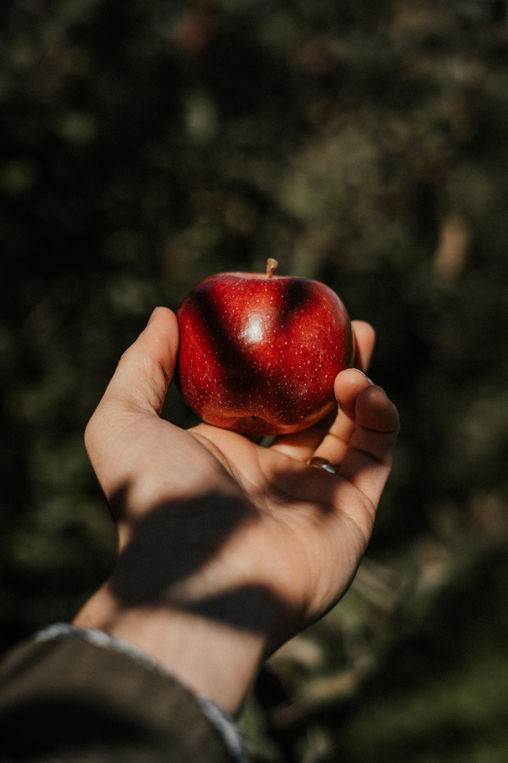 person holding red apple fruit