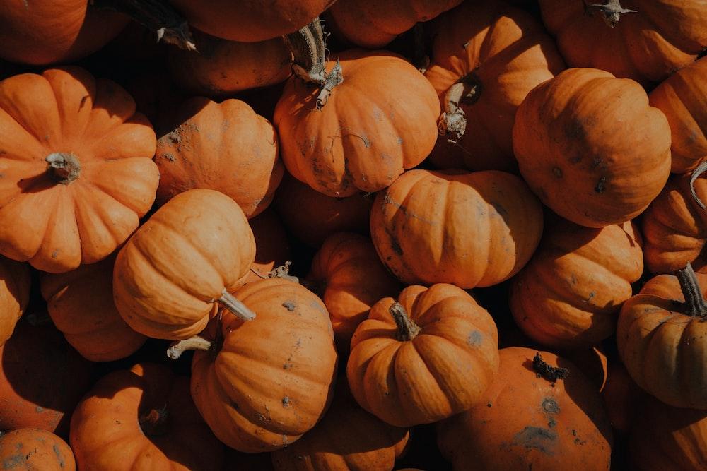 orange pumpkins on brown soil