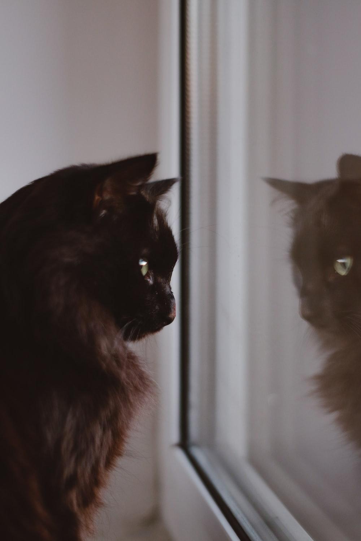 black cat on white window curtain