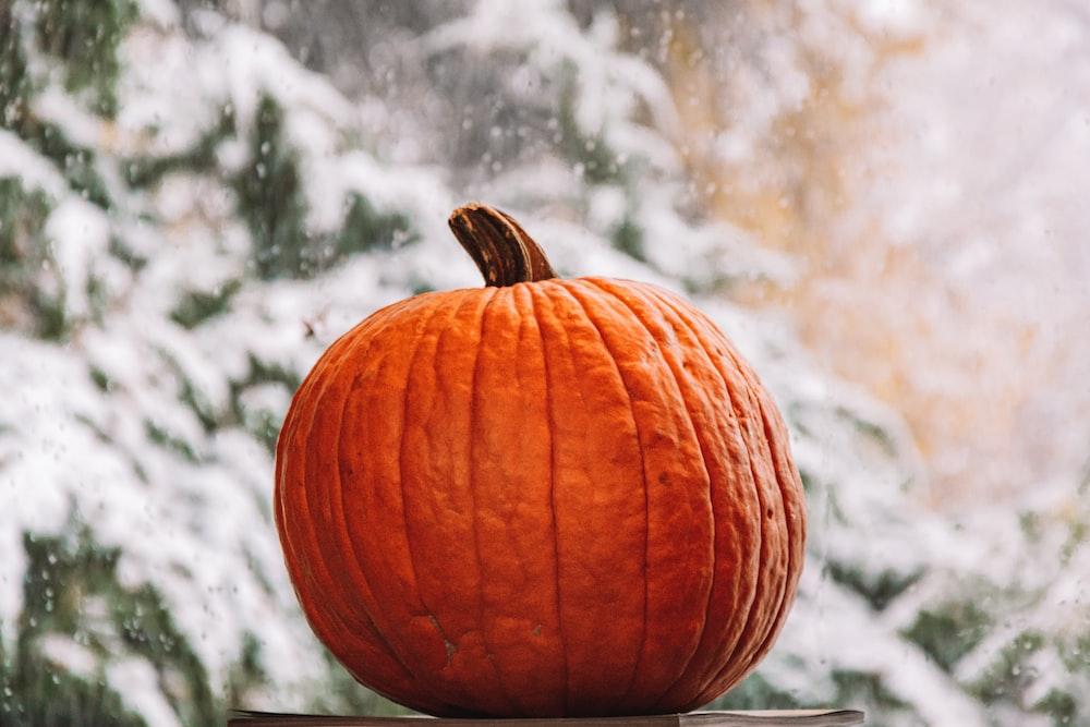 orange pumpkin on white snow covered ground