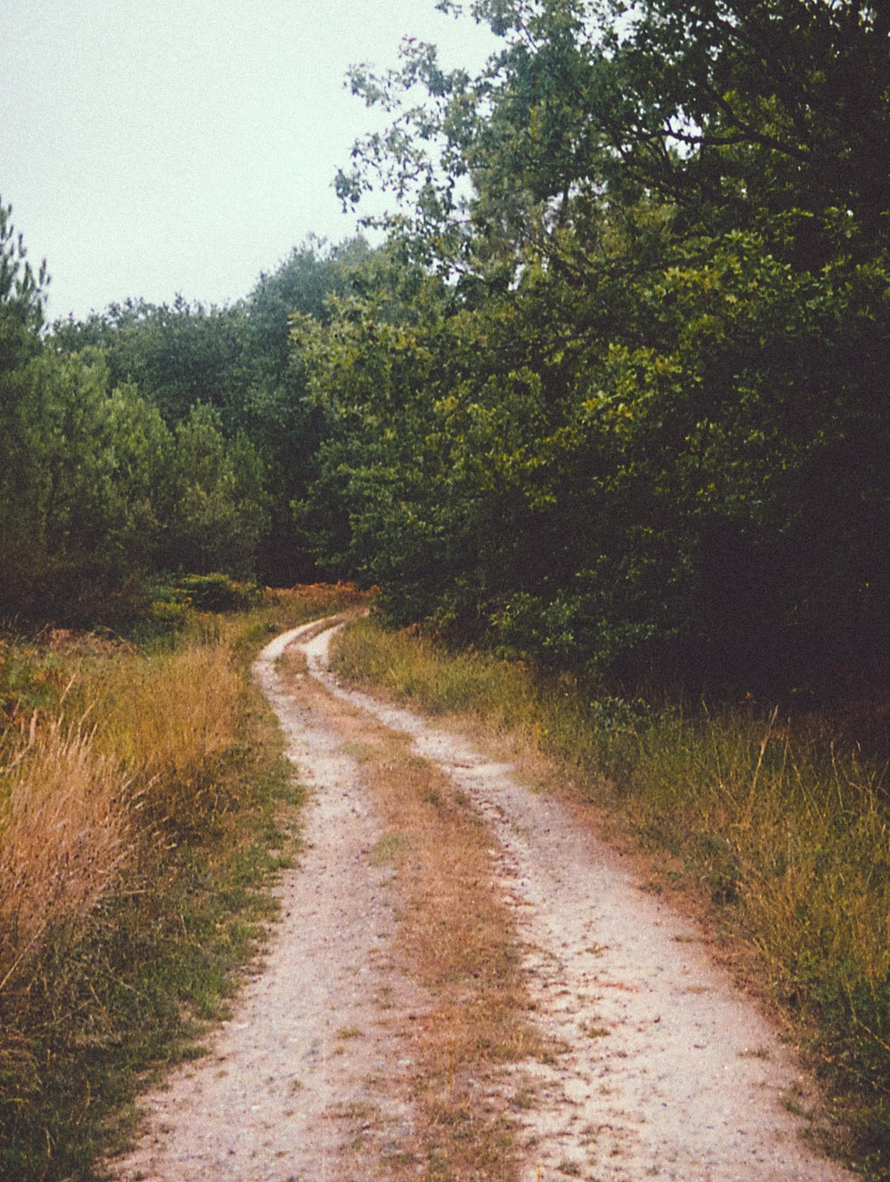 brown dirt road between green grass and trees during daytime