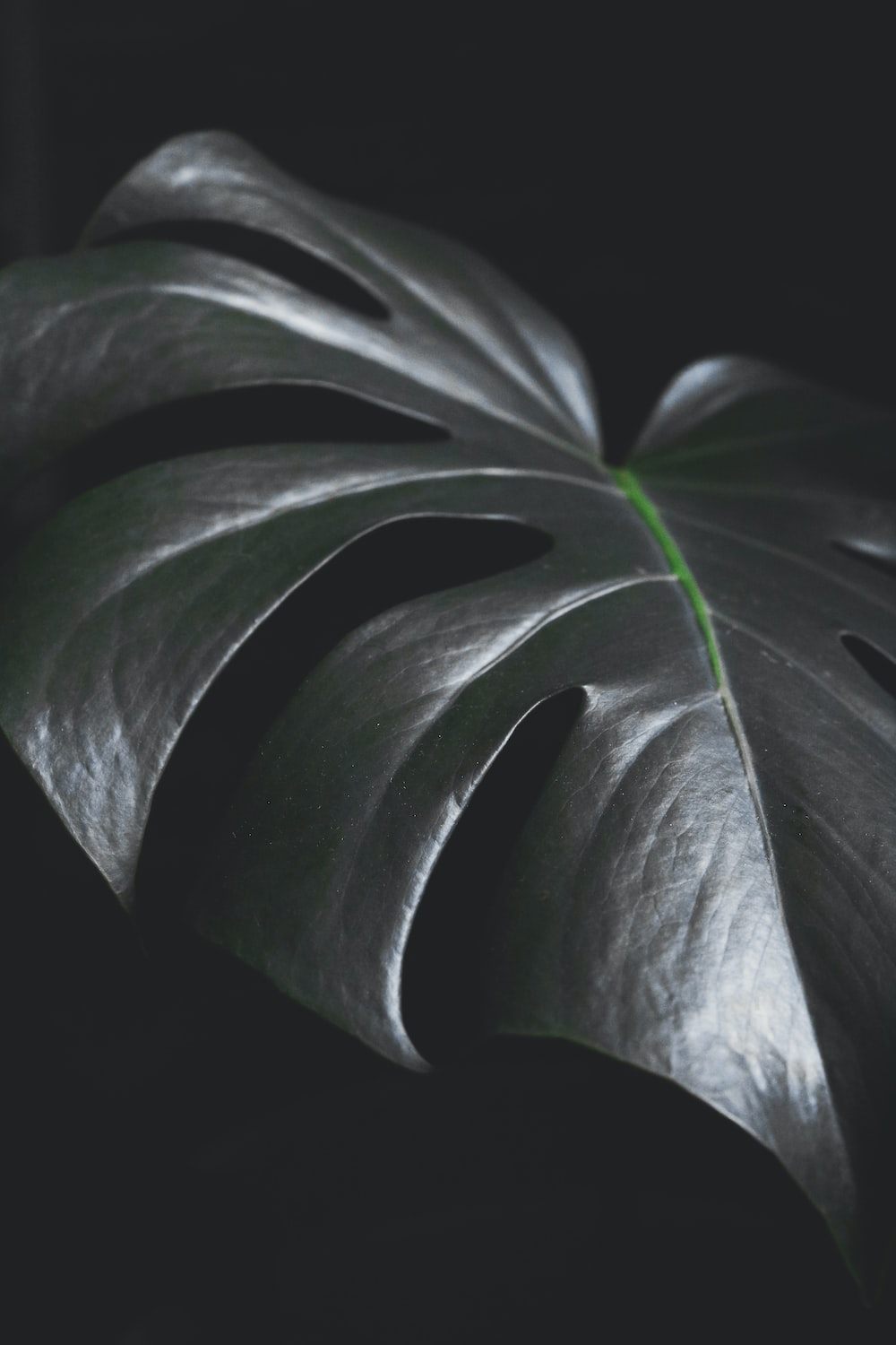 green leaf plant in dark room