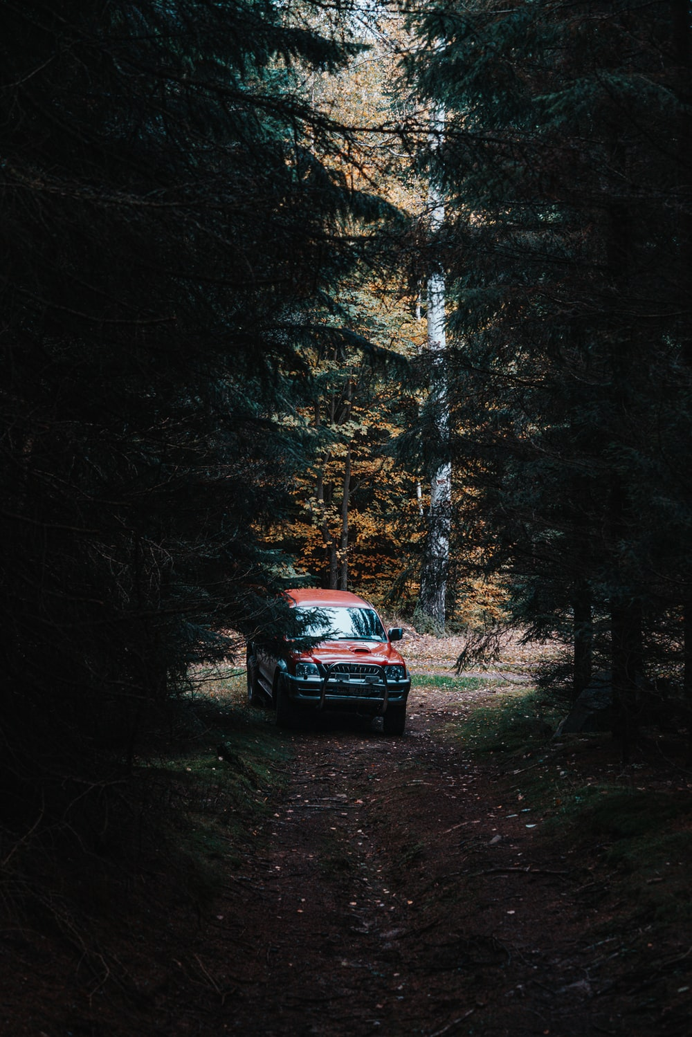 red car in the middle of forest