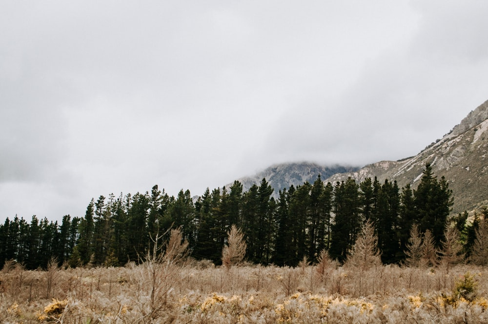 green pine trees on brown grass field near mountain during daytime