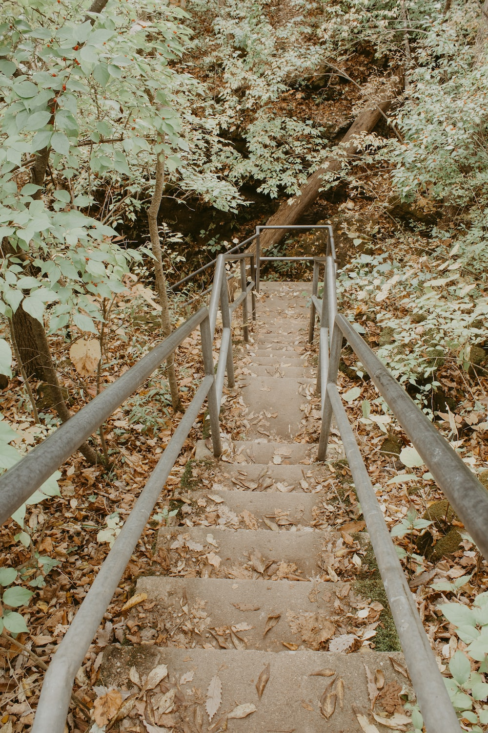brown wooden staircase in forest during daytime