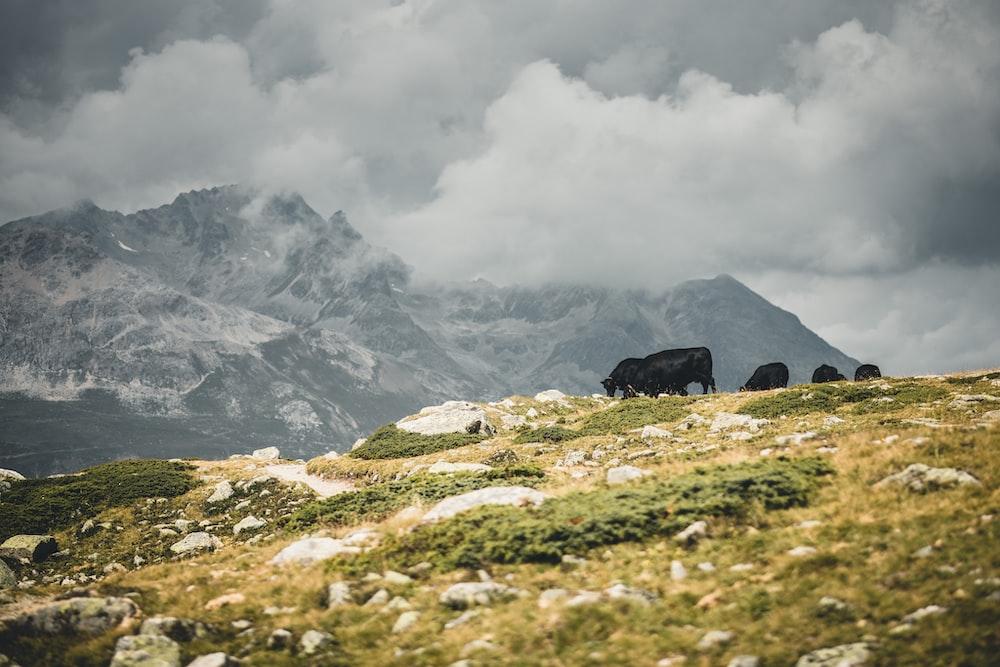 green grass field near mountain under white clouds during daytime