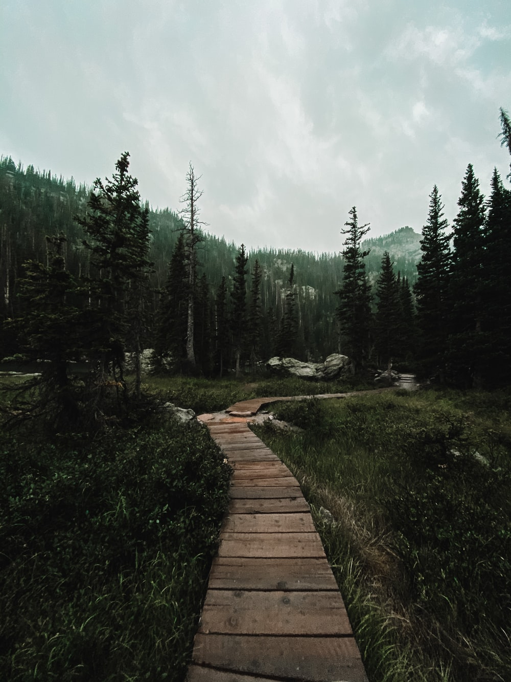 brown wooden pathway between green trees under white clouds during daytime