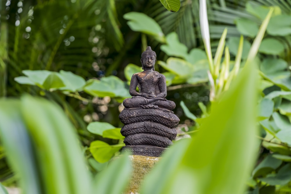 brown buddha statue near green leaf plants during daytime