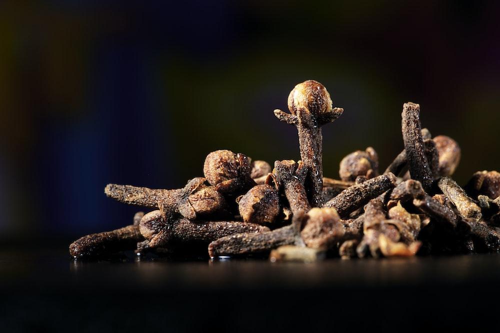 brown mushroom on water during daytime