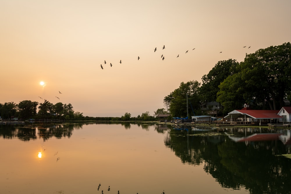 birds flying over the lake during sunset
