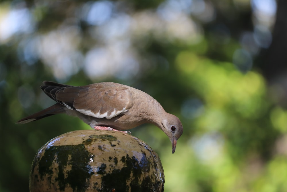 brown and white bird on brown tree trunk