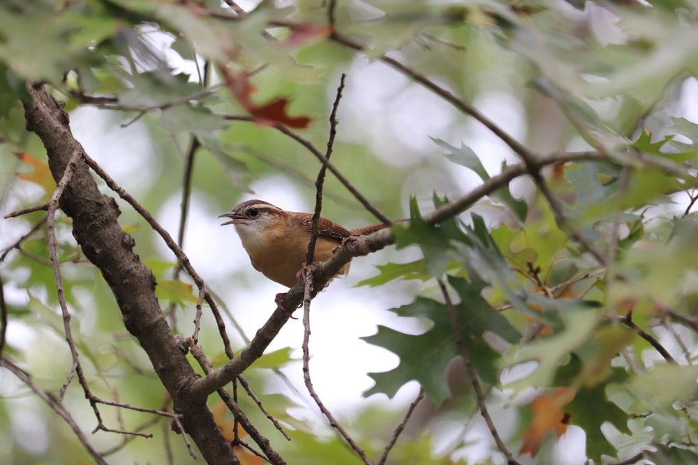 brown and white bird on tree branch during daytime