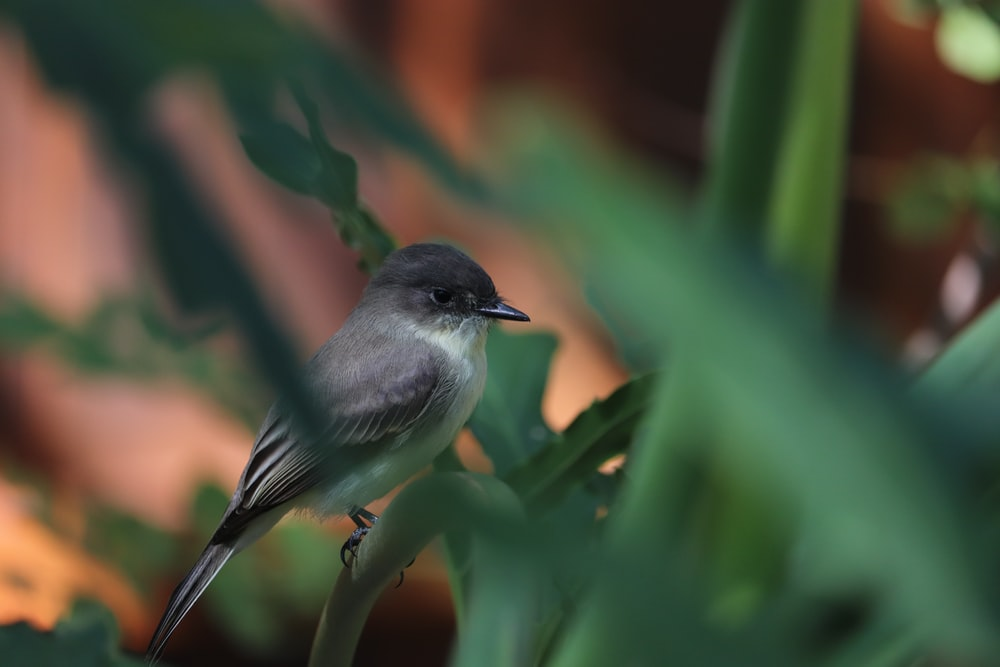 black and white bird on green plant