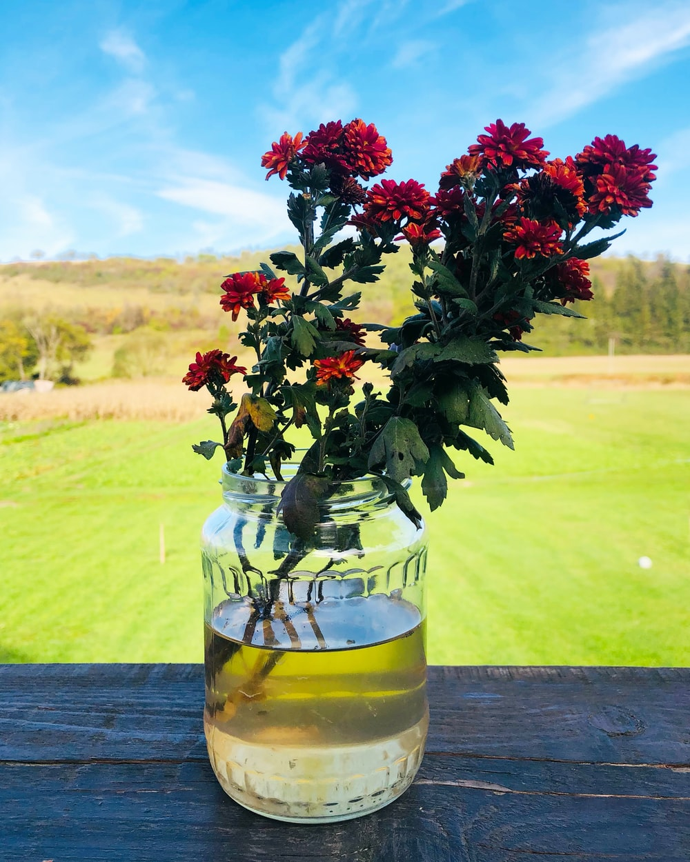 red and green plant in yellow glass vase on brown wooden table