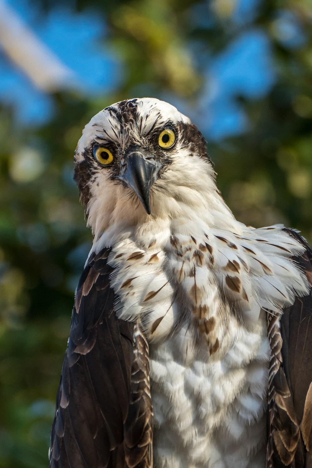 white and black eagle in tilt shift lens