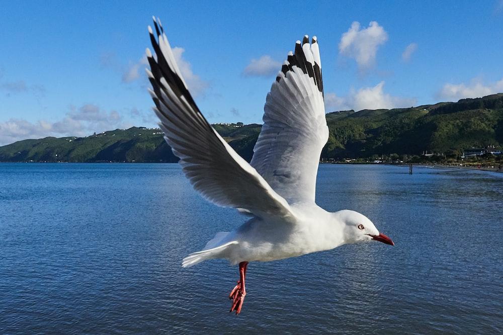 white gull flying over sea during daytime