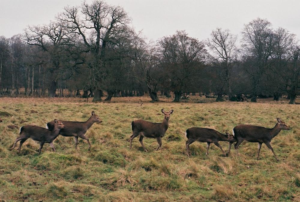 herd of deer on green grass field during daytime