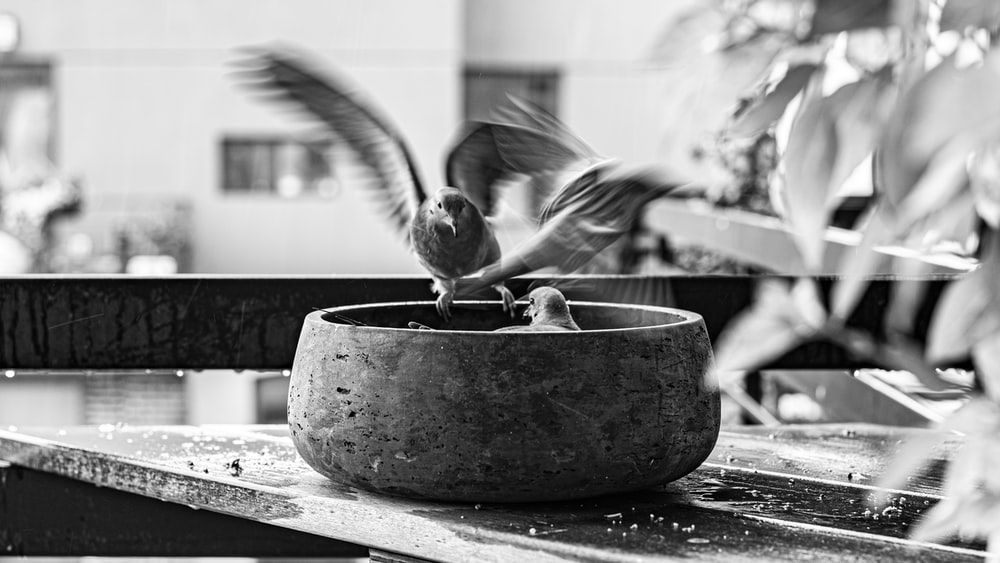 grayscale photo of bird on bird bath