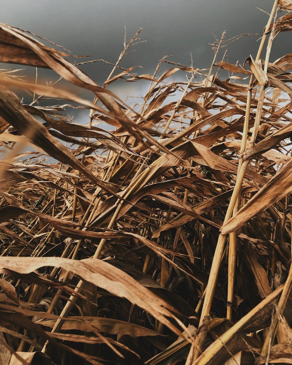 brown dried grass under blue sky during daytime