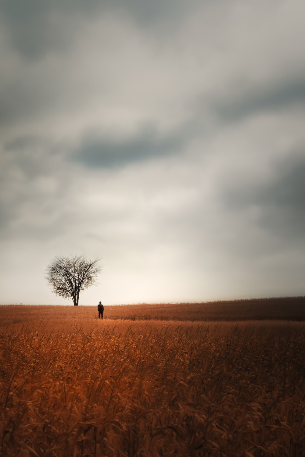 person standing on brown field under gray clouds