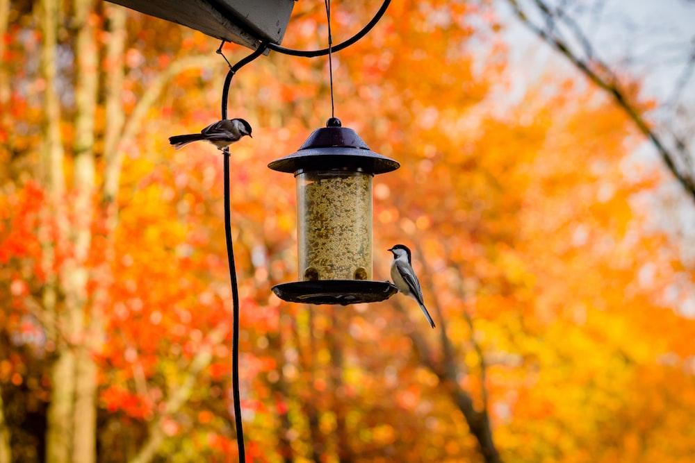 gray bird on black steel bird feeder during daytime