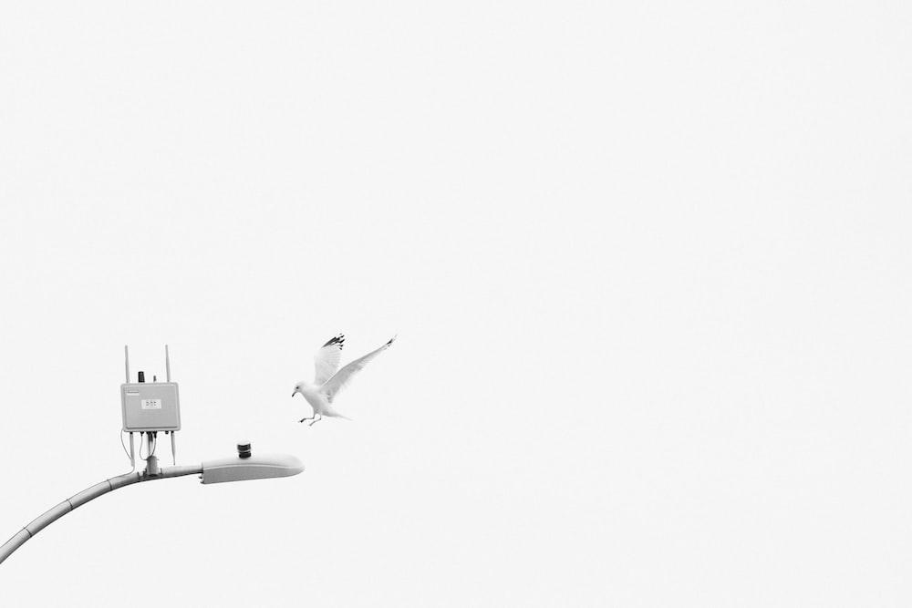 white and black airplane on white sky