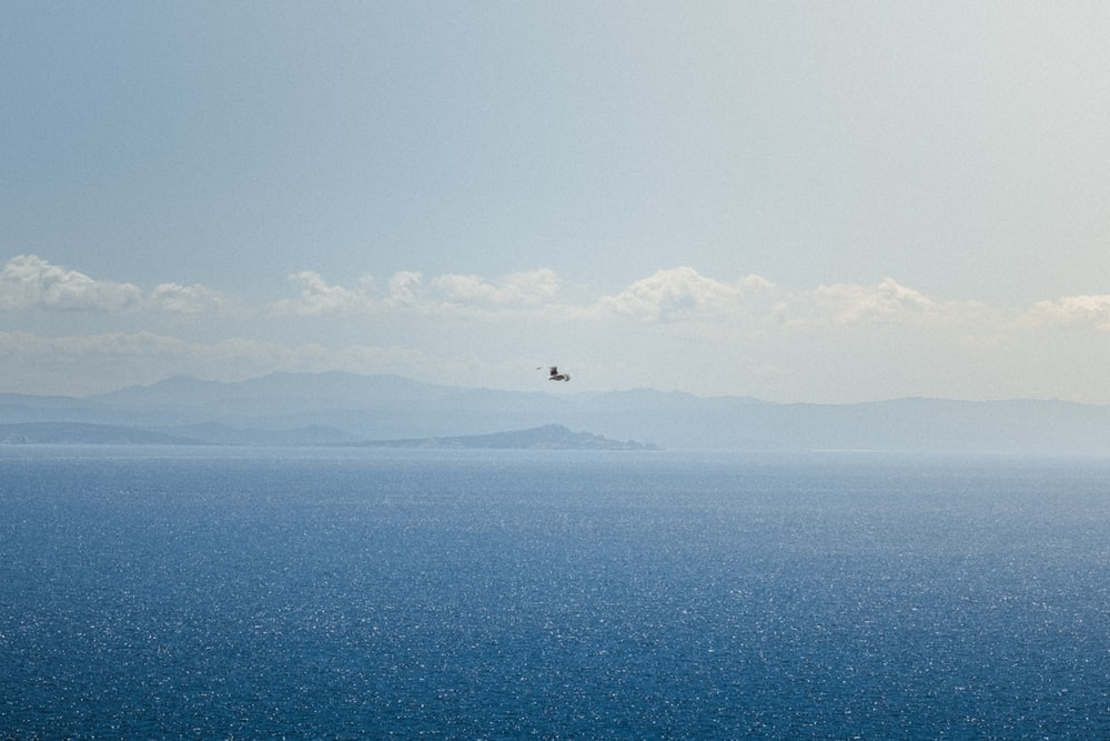 bird flying over the sea during daytime