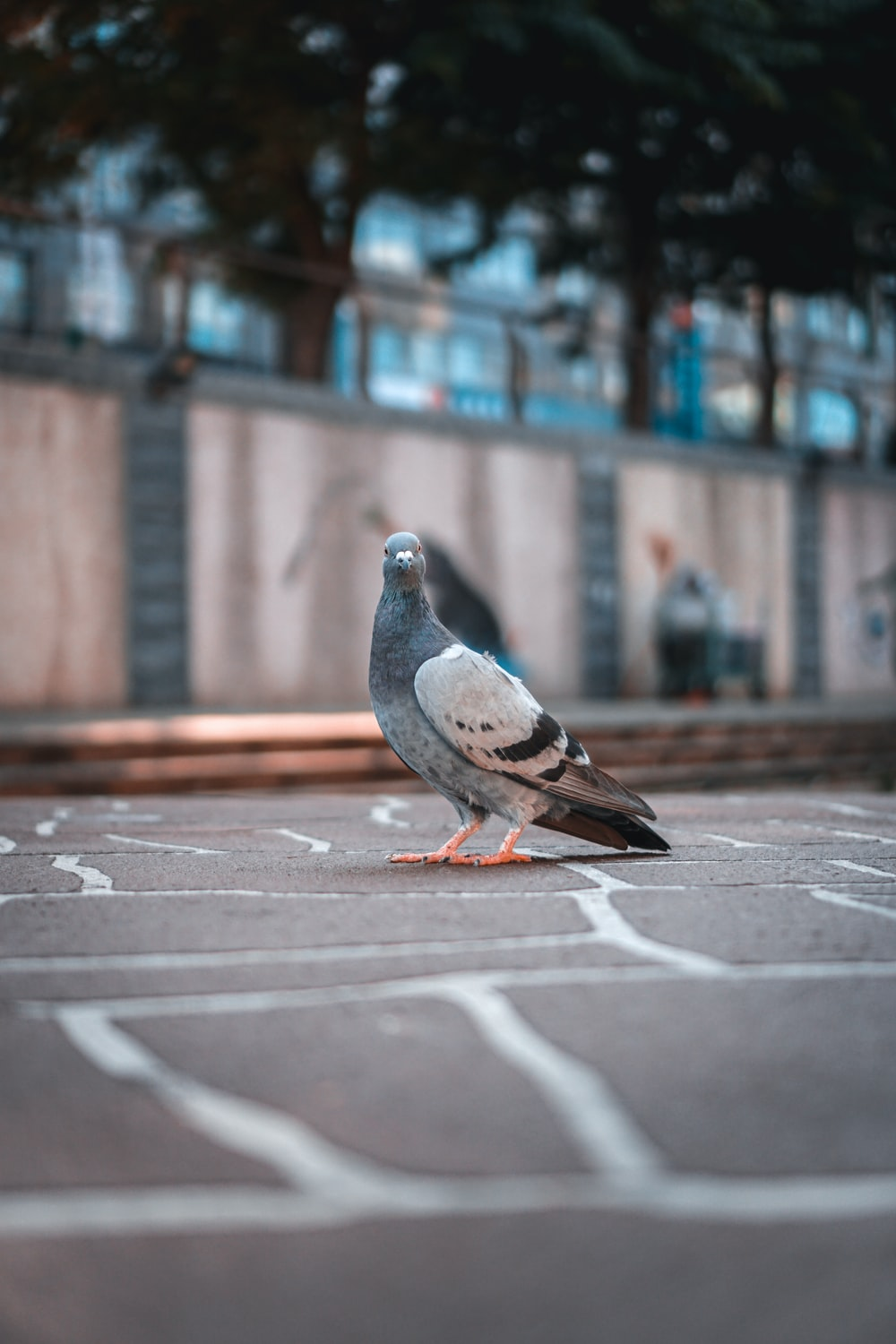gray and white pigeon on gray concrete road during daytime