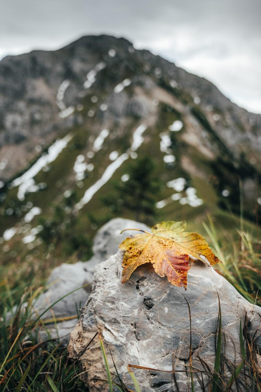 orange maple leaf on gray rock