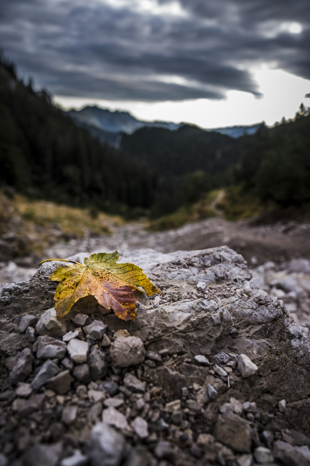 red maple leaf on gray rocky ground during daytime